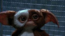 Gremlins - movie (gizmo)