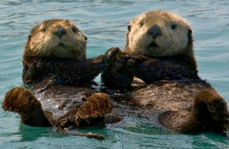 sea-otter-friendship-feels